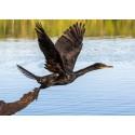 Système de répulsion cormorans